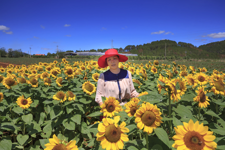 loc: Bao Loc town, Lam Dong Province, Vietnam - February 28, 2017: the beautiful woman and sunflower field in Bao Loc town, Lam Dong province, Vietnam.