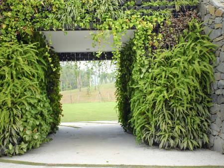 gates entrance to a garden and green grass and a ferns tree Stock Photo