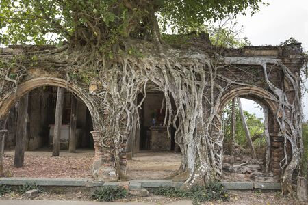 The roots of the ancient tree cling to the wall of a temple