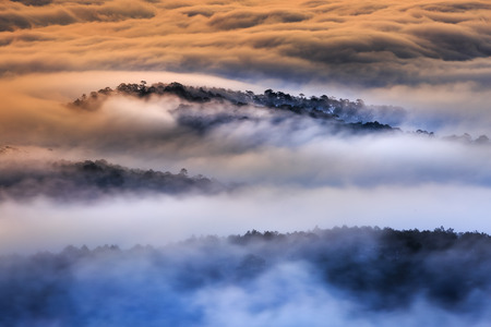 dalat: The magical beauty of the pine forests on the hill hidden in the early morning clouds at Da Lat town. Da Lat always is  foggy town in the morning. Dalat is one of the most beautiful and the famous town in Viet Nam.