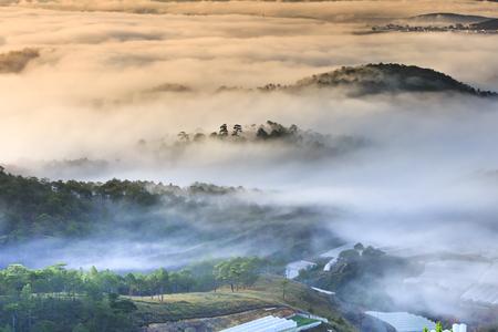 Da Lat 마을의 이른 아침 구름에 숨겨진 언덕에있는 소나무 숲의 마법의 아름다움. Da Lat는 항상 아침에 안개가 자욱한 마을입니다. 달랏은 베트남에서  스톡 콘텐츠