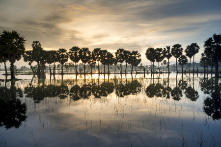 Beautiful landscape of nature with dramatic cloudscape, row of palm trees in silhouette reflect on the surface water of the river at sunrise at Tinh Bien , An Giang province, Mekong Delta, Vietnam
