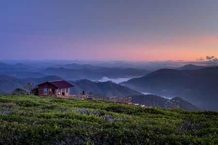 Beautiful dawn at Cau Dat Tea Plantation in Dalat Town, Vietnam