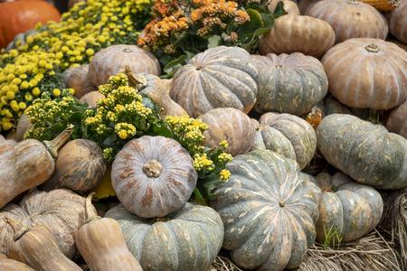 Haloween decorations. The arrangement of pumpkins Preparing for Halloween