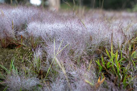The colorful dew droplets on the grass after the rain. The concepts for background decoration 写真素材