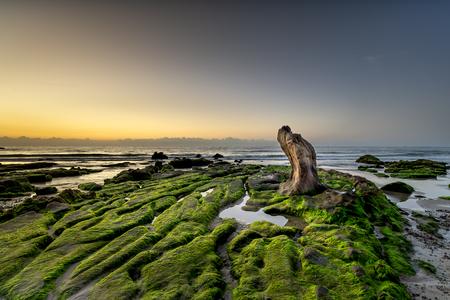 Strange rocks and moss in Co Thach beach Фото со стока