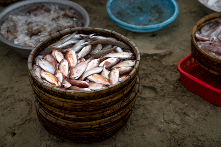 A weaved bamboo tray full of small freshly caught fish on a beach getting ready for the local wholesale market in a beach of Da Nang City, Vietnam Stok Fotoğraf