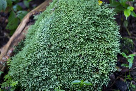 Green moss grows in tropical forests Stockfoto - 132407556