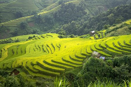 Beautiful terraced rice paddy field and mountain landscape in Mu Cang Chai. Rice is still green and spread across the mountains in Mu Cang Chai, Vietnam
