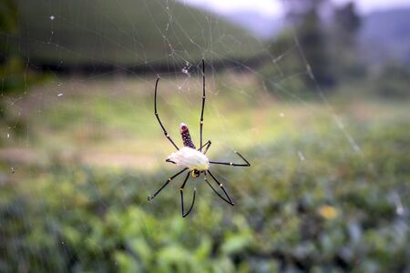 spider eating wrapped prey on its web Stockfoto