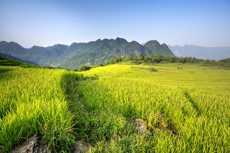 view of beautiful green terraces of Pu Luong commune, Thanh Hoa province, Viet Nam