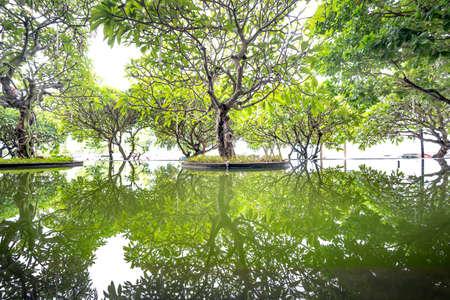 row of tree reflect on water Zdjęcie Seryjne