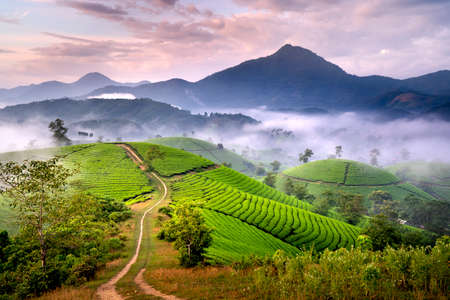 See the Long Coc tea hill, Phu Tho province, Vietnam in the morning mist. This is the most beautiful tea hill in Vietnam with hundreds and thousands of hills, large and small.
