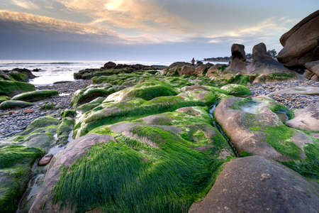Stone and green moss in Co Thach beach, Binh Thuan, Viet Nam