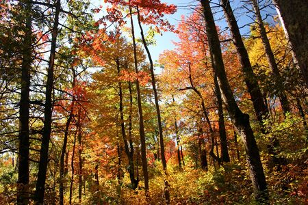 fall foliage in the woods