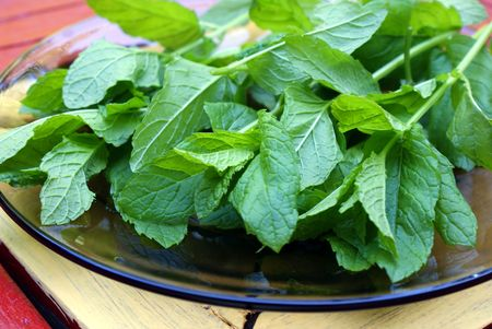 freshly cut mint from a garden