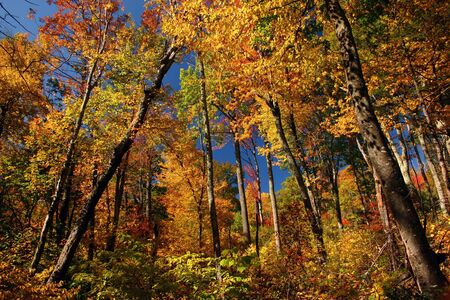 fall foliage in a Shenandoah National Park Stock Photo