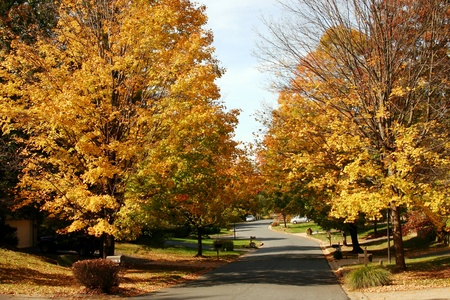 fall foliage in a suburban neighborhood