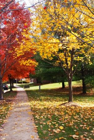 가을에 교외 동네에서 보도