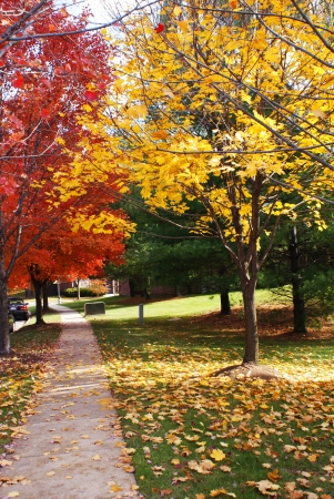 A sidewalk in a suburban neighborhood in the fall