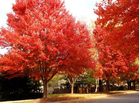fall foliage in a suburb neighborhood street photo