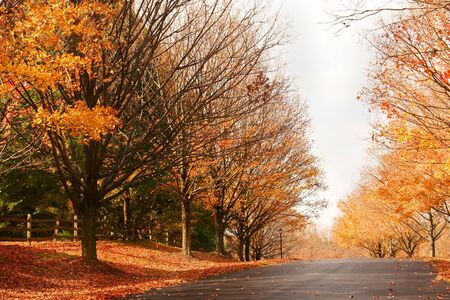fall foliage in a suburb neighborhood street Stock Photo