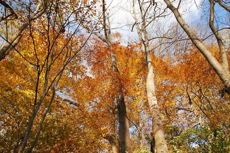 View of trees and fall foliage in the woods