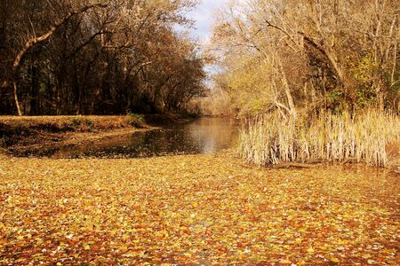 fall foliage around a water channel Stock Photo
