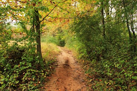 숲에서 하이킹 트레일 스톡 사진