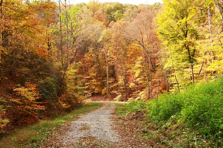 an unpaved road through a thick forest in the fall Stock Photo