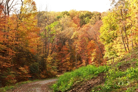 가을에 두꺼운 숲을 통해 비포장 도로