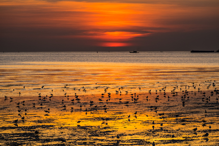 Seagulls on a part of mangrove forest on sunset background in twilight time. Stock Photo