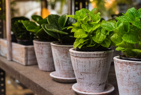 Small tree pot for herbs on the shelves inside the nursery plantation, selective focus.