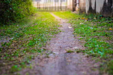 A small grass walkway and ground. Amidst the shady and beautiful nature in horizontal view with flare light effect , selective focus Фото со стока