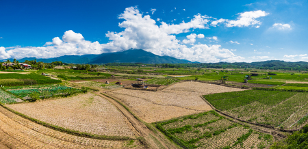 Panorama view of rice field in the north of Thailand with big mountain and cloudy blue sky background, selective focus.
