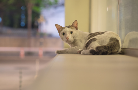 A stray cat feel afraid and be careful while sitting and look at shooting from camera in the night time at city, selective focus. Stock Photo