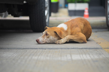 Stray brown dogs are lying down on concrete floors in outdoor car park area, selective focus.