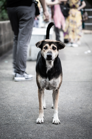 A stray dog standing and looking at the camera.