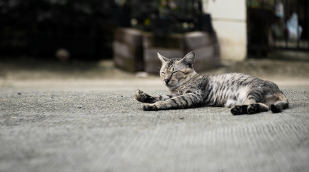 Tabby cat lying down and sleeping on the floor, selective focus.
