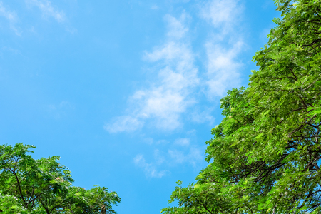 A Top of green tree with cloudy and blue sky background. Stock Photo