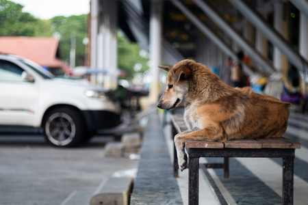 The stray dog is sitting on a long bench and is pondering something. The community has a backdrop of parking lots and market buildings, selective and soft focus.