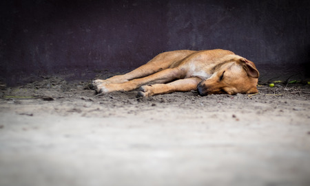 Brown homeless dog sleeping on the road.