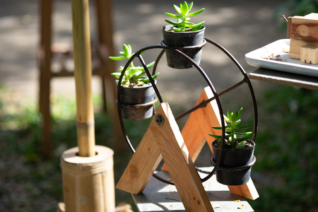 Wooden ferris wheel with little cactus in black pot, item for decoration in the small garden, selective focus.