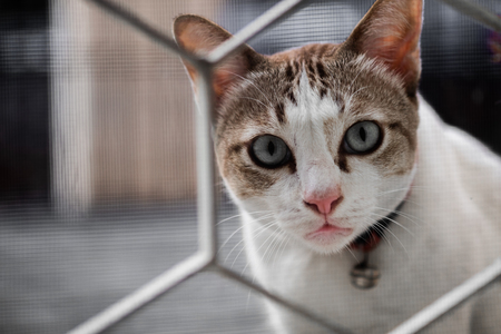 A cute cat stared with suspicion and looking through the house fence, selective focus. Stock Photo