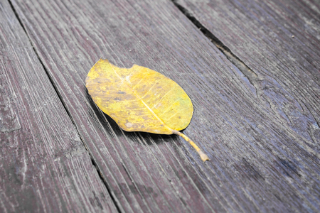 A yellow dry leaf on wooden floor in brown color, selective focus.