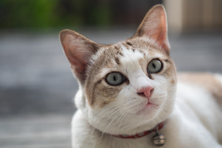 Close up view of a cute cat, selective focus. Stock Photo