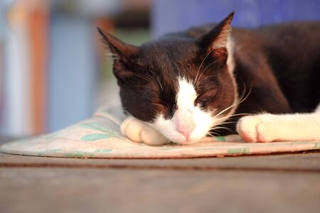 Close up view of a cute cat sleeping on the floor, selective focus.