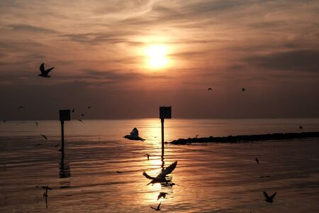 Sunset scene with warning marking steel pole in the sea and flying seagulls in the sky at twilight time. Stock Photo - 133054570