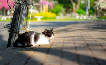 Cute black and white stray cat sitting and sleeping beside a bicycle on walkway in public park.