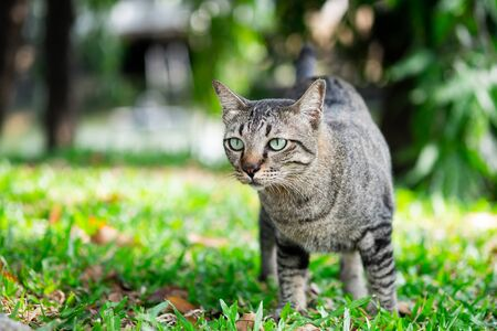 Cute tabby cat looking something on the grass floor in the garden public park.